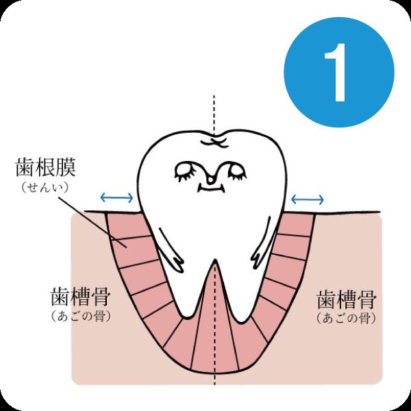 マウスピースによる歯列矯正1